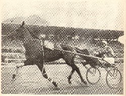 Archivio giornali e quotidiani ippica e trotto e cavalli for Resoconto tratto da articoli di giornali